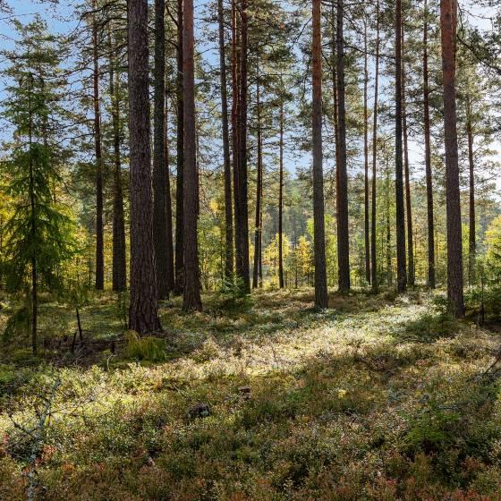 Metsän Arviointi